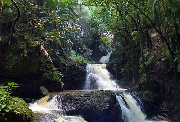 ハワイ・トロピカル植物園