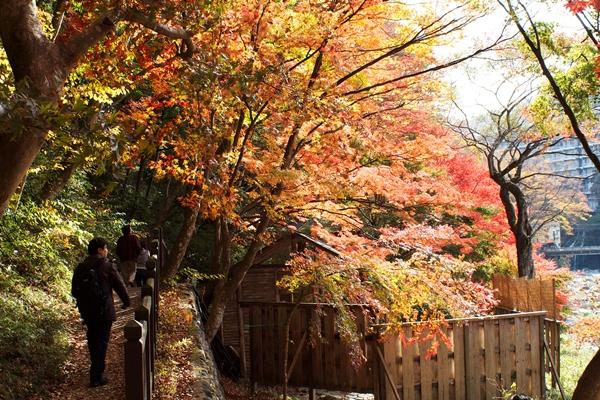 箒川沿いの紅葉