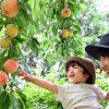 大人数旅行の行き先に困ったら「果物狩り」へ!人気エリアトップ3をチェック!