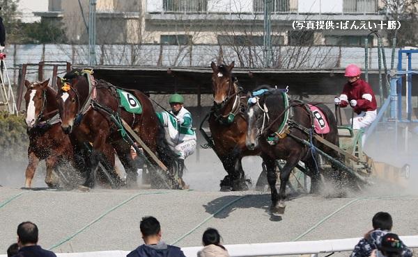 ばんえい競馬ではゴールまで休憩しながらレースが進む