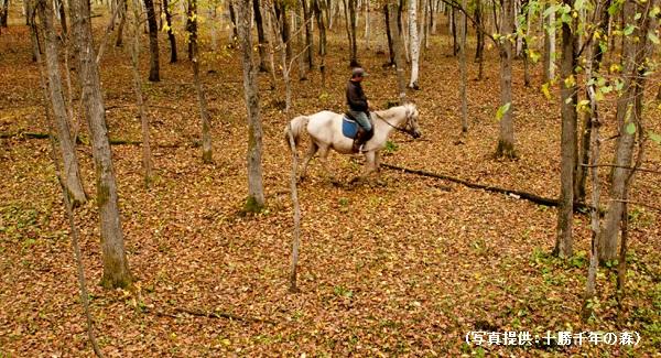 北海道社員旅行で乗馬体験も楽しい