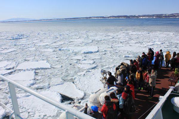 砕氷船おーろら号から流氷を間近で観察