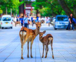 古都・奈良に新しい情報発信記事誕生