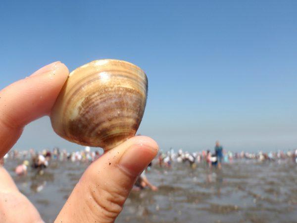 関東でおすすめの潮干狩りスポット