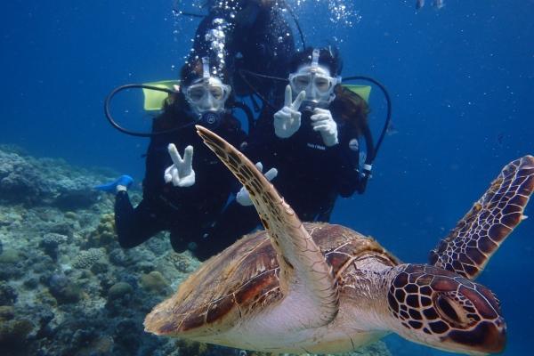 ウミガメと泳げる