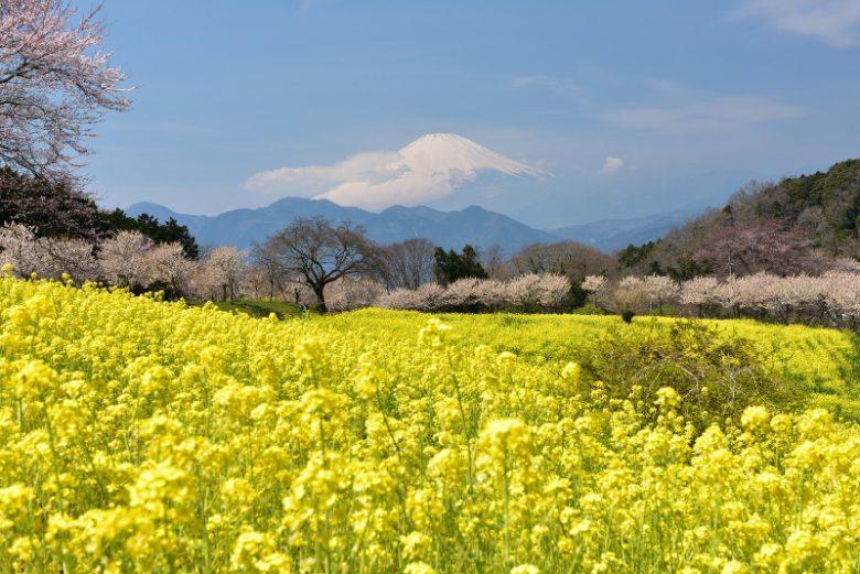 大井町から見える富士山