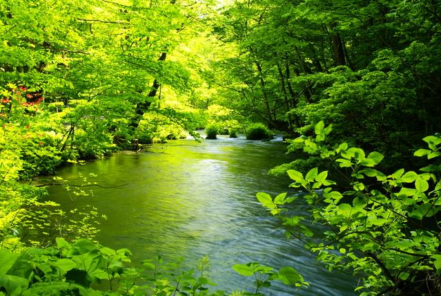 夏の奥入瀬渓谷