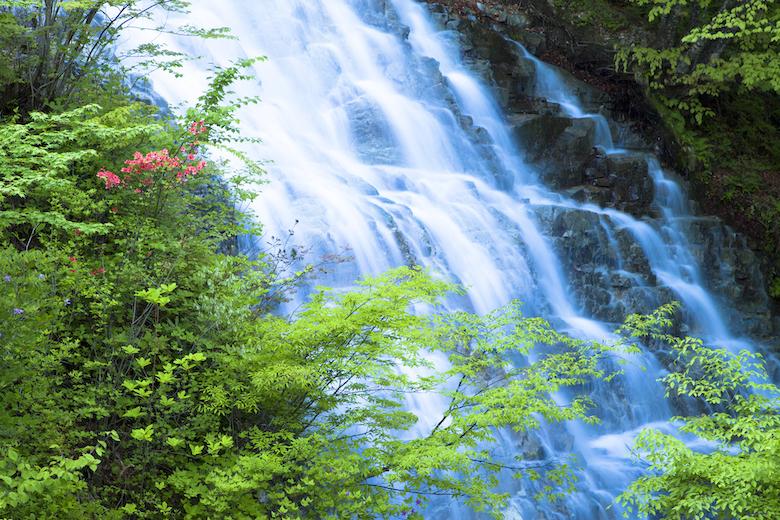 四万温泉近くのしゃくなげの滝