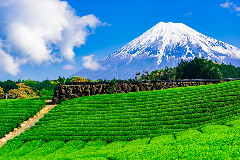東海出発で人気の行き先は静岡