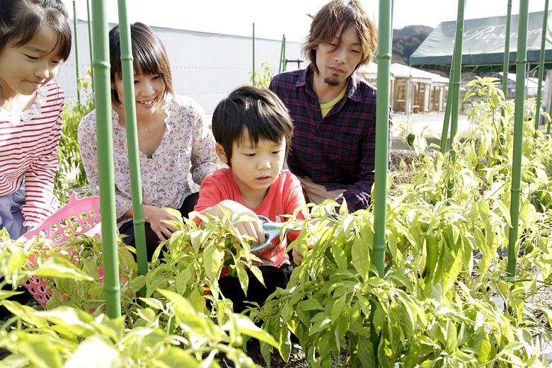 ファームでは収穫体験も可能