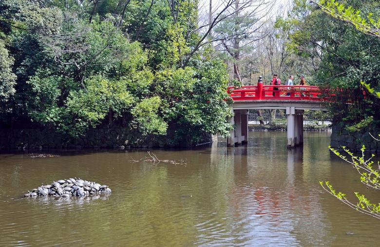 氷川神社・神池