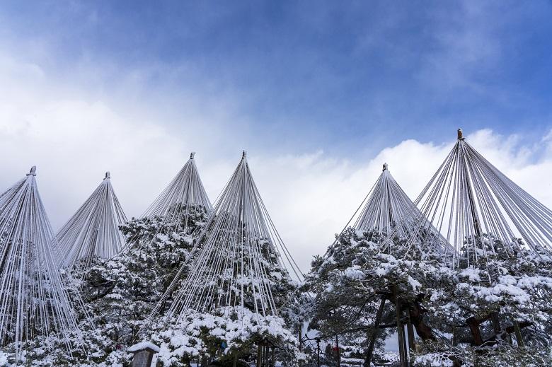 兼六園の雪吊り