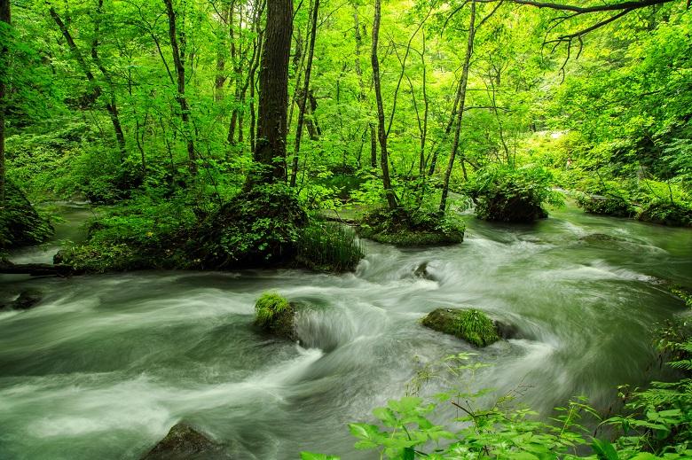 新緑が美しい奥入瀬渓流