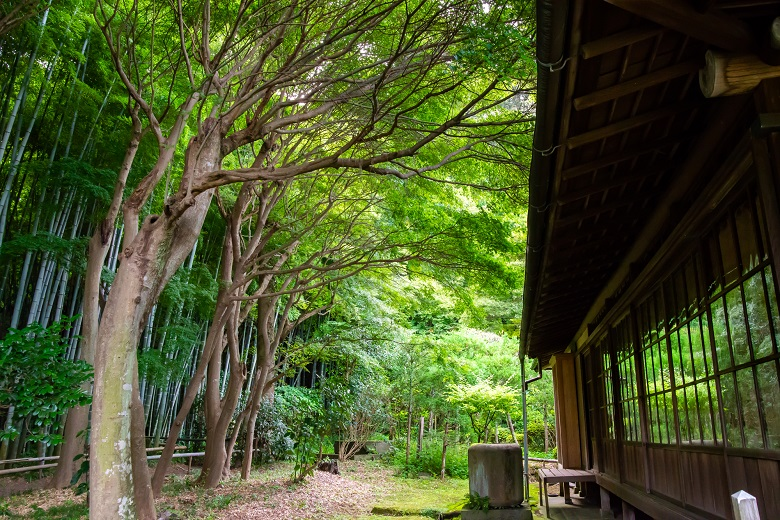 竹林が美しい鎌倉・英勝寺