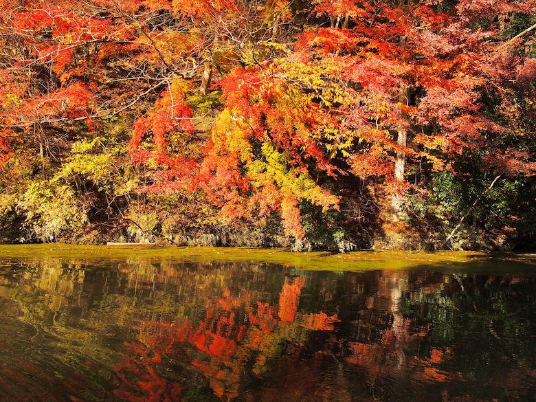 千葉・亀山湖