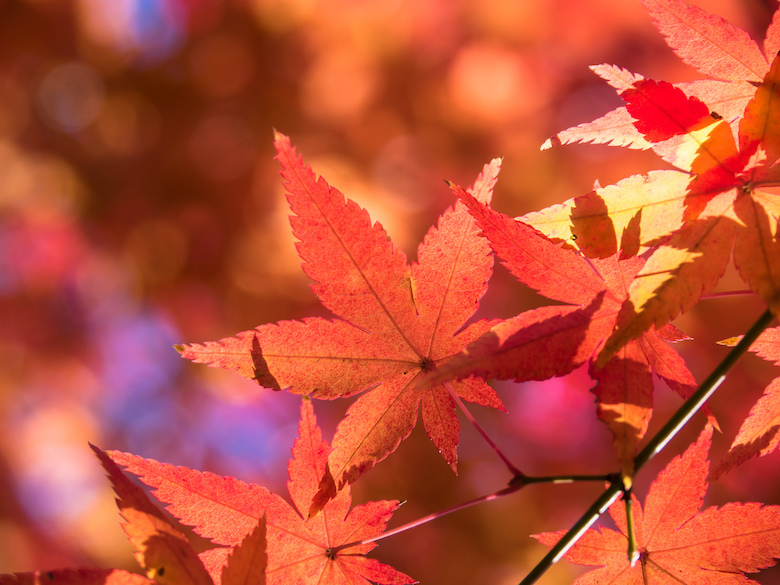 関東でおすすめの紅葉狩りスポット