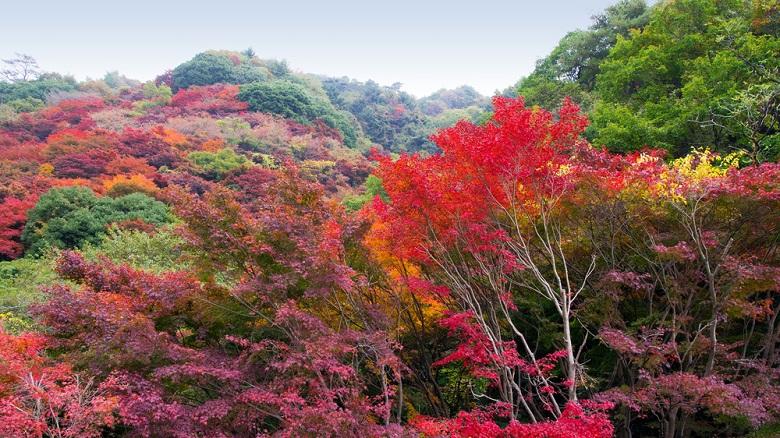 紅葉も美しい六甲山
