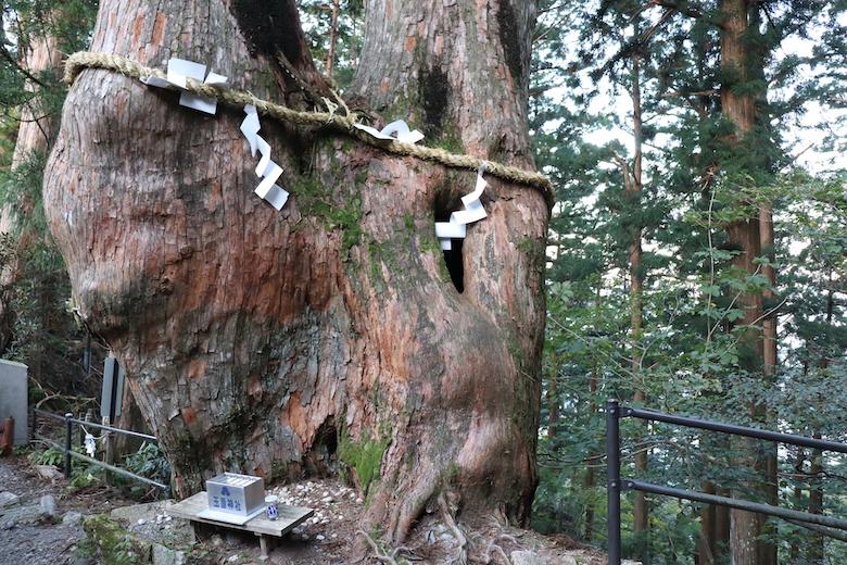 杉の巨木群