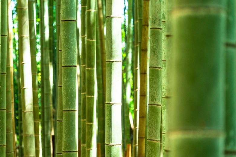 石畳の前は竹を敷き詰めていた旧街道
