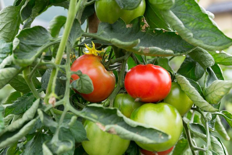 大島トマト農園