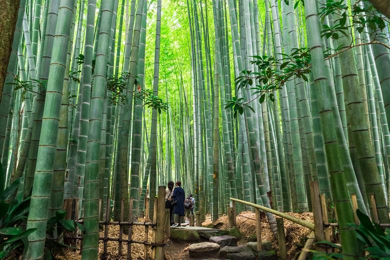 鎌倉・報国寺
