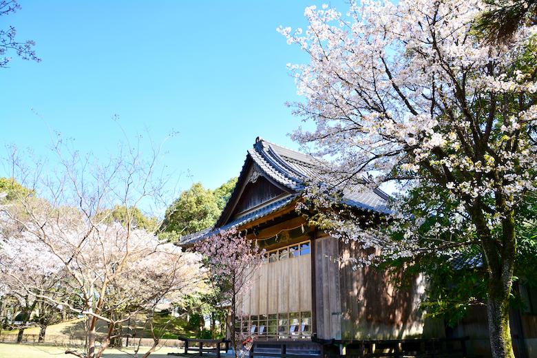 水前寺成趣園 桜
