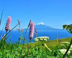 礼文島の高山植物と利尻島