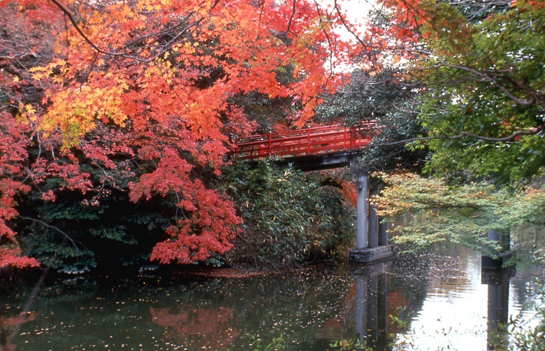 古城公園・紅葉