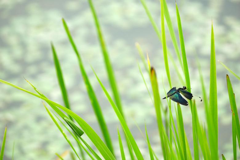 伊豆沼の自然
