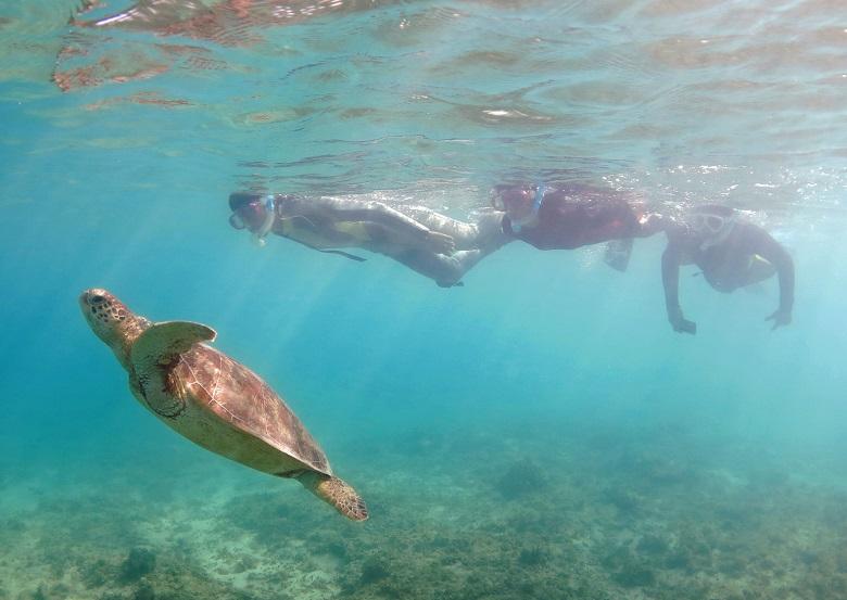 ウミガメと遊泳