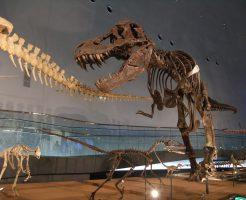 恐竜の全身化石