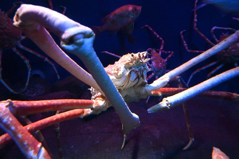 深海に住む蟹