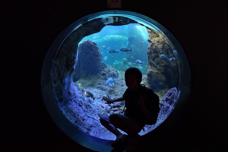 水族館ツアーを楽しむプラン