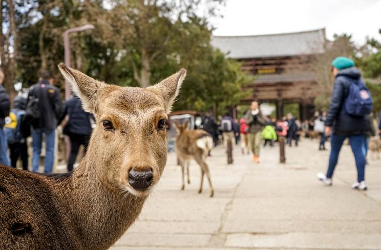 奈良への修学旅行・コロナ対策取り組み