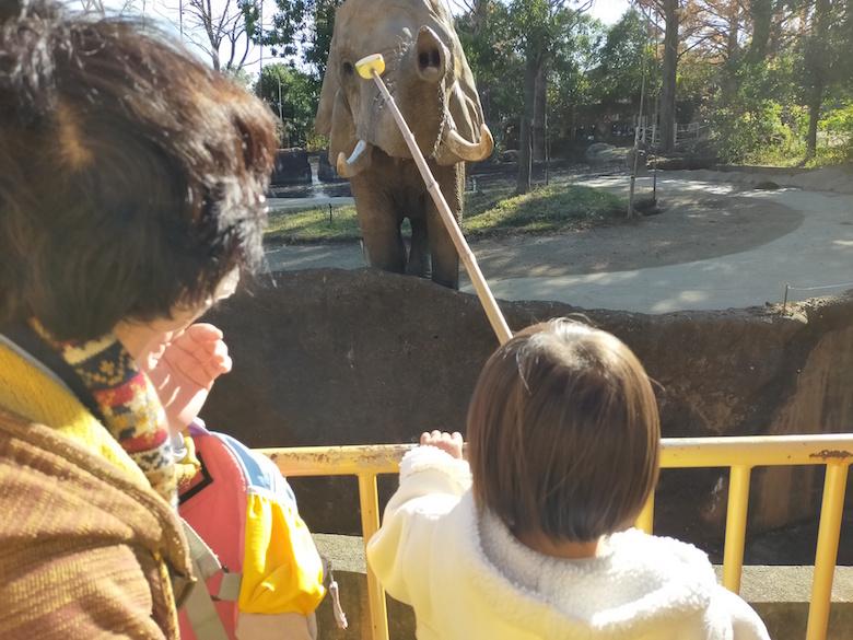 ゾウの餌やりタイム