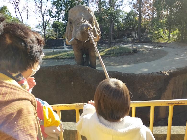 ゾウの餌やり
