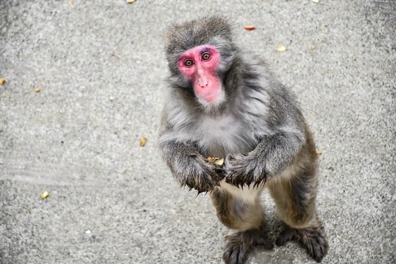 八木山動物園のニホンザル