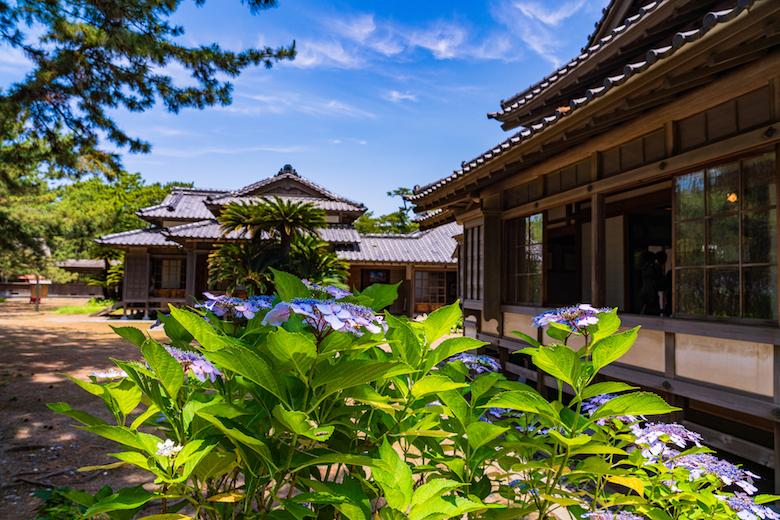 紫陽花の咲く沼津御用邸